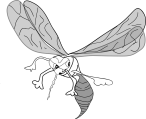 mosquito-48547_960_720.png